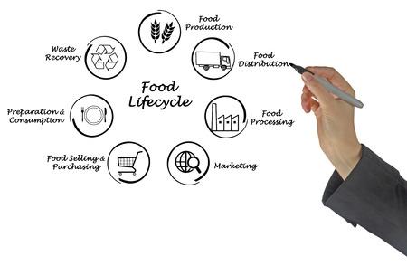 ciclo de vida: Ciclo de vida de la Alimentaci�n Foto de archivo