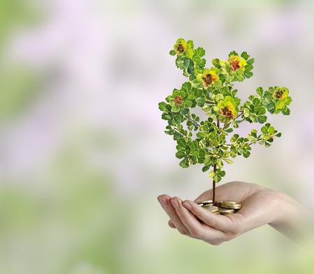 dinero euros: La inversi�n de las empresas verdes