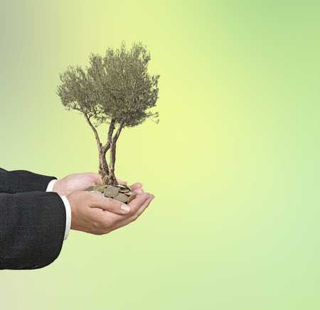 ecosavy: Olive tree in palms as a gift