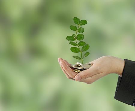 sembrando un arbol: La inversi?n de las empresas verdes Foto de archivo