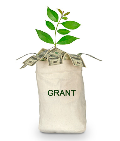 grant: Tree growing from grant