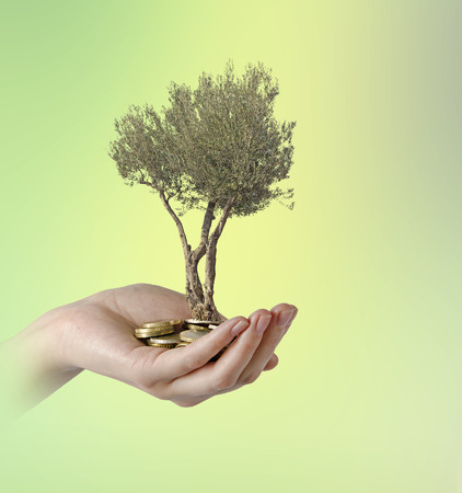 subsidy: Olive tree in palm as a gift Stock Photo