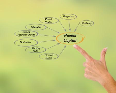 population growth: Diagram of Human Capital Stock Photo