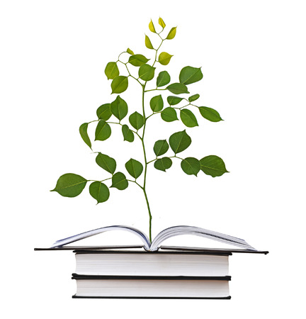 offset up: Sapling growing from book