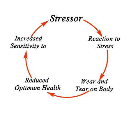 optimum: Cycle of stress