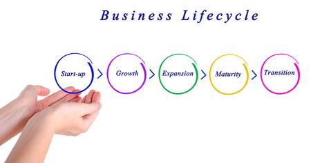 ciclo de vida: ciclo de vida empresarial