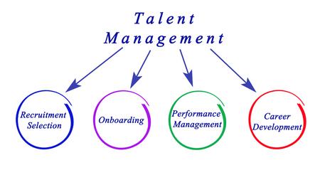 succession: Diagram of Talent Management