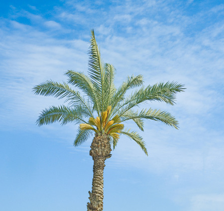 dioecious: Close up of palm Stock Photo