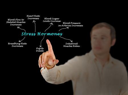 hormones: Effects of Stress Hormones Stock Photo
