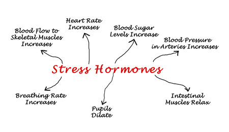 dilate: Effects of Stress Hormones Stock Photo