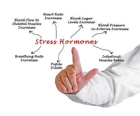 hormonas: Efectos de las hormonas del estr�s