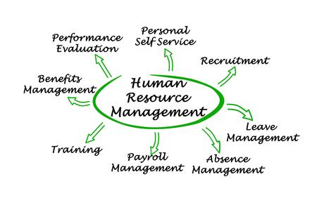Diagram van Human Resource Management Stockfoto