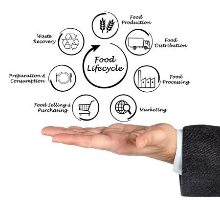 lifecycle: Diagrama del ciclo de vida de la Alimentación Foto de archivo