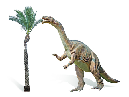 paleontology: Close up of Plateosaurus dinosaur Stock Photo