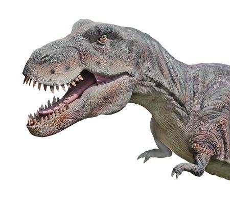 tyrannosaurus rex: Tyrannosaurus rex Stock Photo