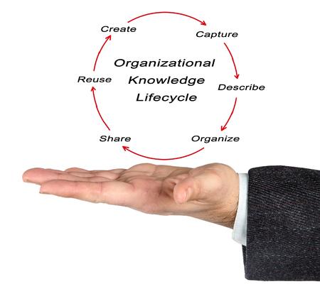 ciclo de vida: Ciclo de Vida del conocimiento de la organización;