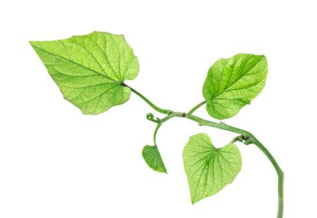 close up: Close up of sapling Stock Photo