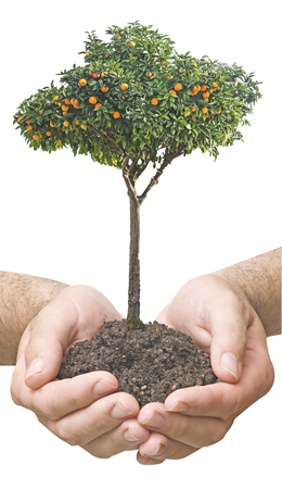 citrus tree in hands