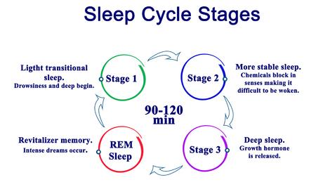 fasi ciclo di sonno