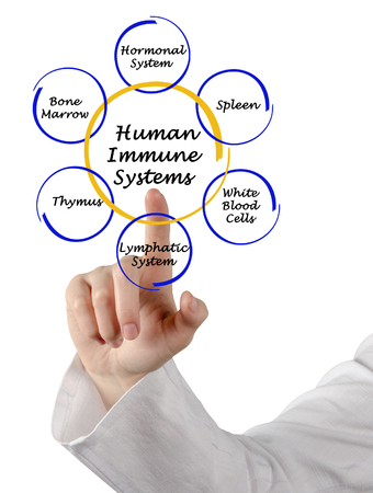 Human Immune Systems Stock Photo