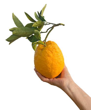 Hand holding orange