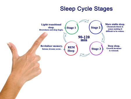 woman presenting Sleep Cycle Stages