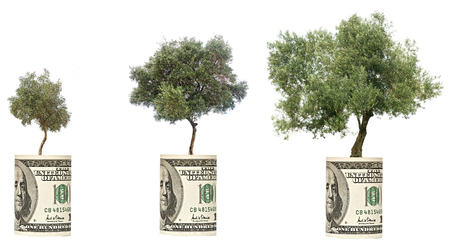 Olive trees growing from the dollar bill