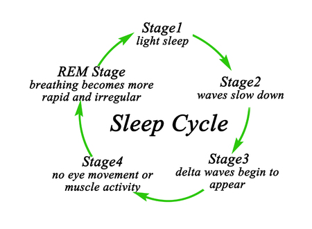 Stages of Sleep Cycle Reklamní fotografie - 121811711