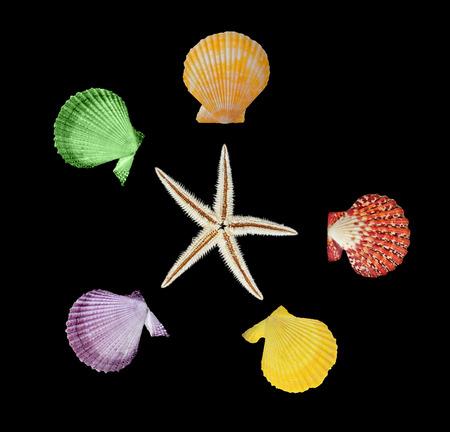 Close up of starfish and seashells Stock Photo