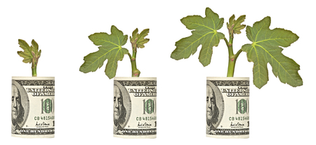 saplings growing from dollar bill Stock Photo