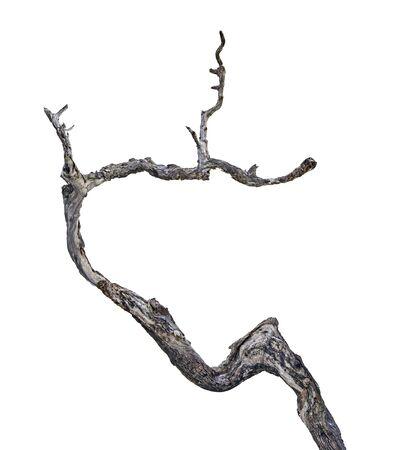 close up of dry branch 版權商用圖片 - 131920973