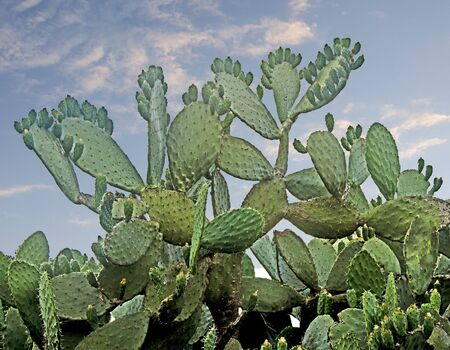 Close up of cactus on sky background Stock Photo