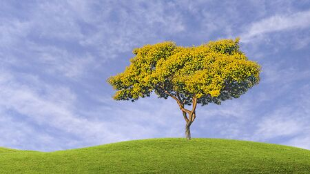 Accacia tree on sky background 版權商用圖片 - 131921528