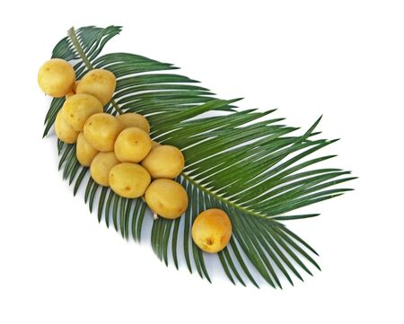 A bunch of fresh dates on palm leaf