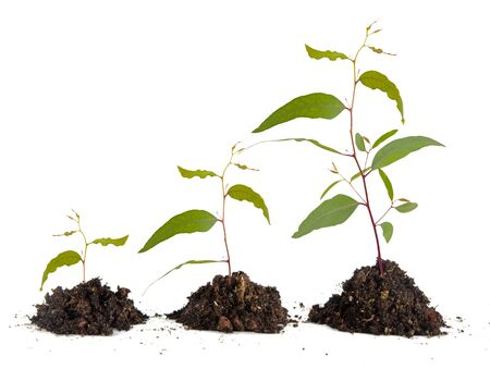 Three saplings on white background