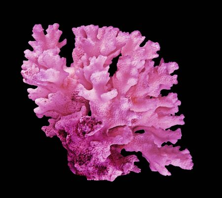 Coral isolated on black background