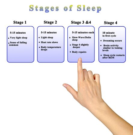 Four Stage of Night Sleep