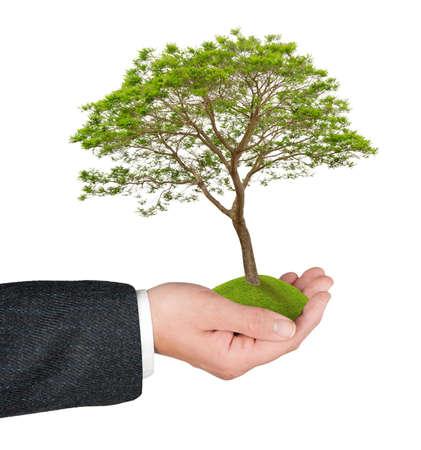 Tree in hand Banco de Imagens
