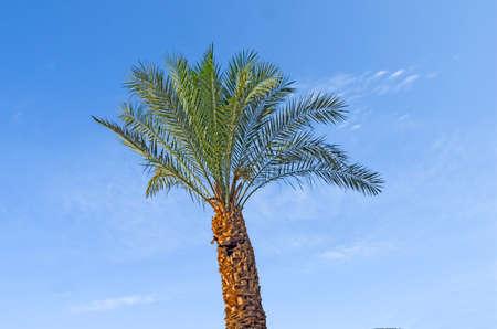 Close up of palm Фото со стока