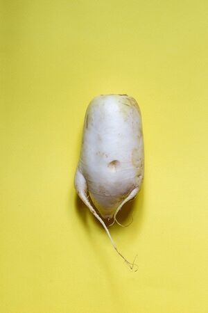 Ugly white radish on a bright yellow background, top view