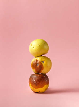 Three rotten apples stacked in a pyramid on a pink background with space. Ugly fruit, close-up. 免版税图像
