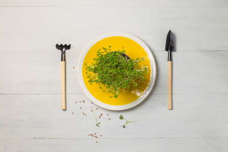 Young shoots of mizuna and amaranth, micro-green in pots on a yellow plate. layout on a gray background. Super food, sprouts