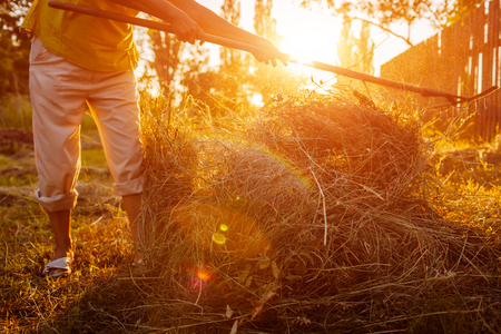 Farmer woman gathers hay with pitchfork at sunset in countryside. Agriculture and farming concept. Hard work in village.