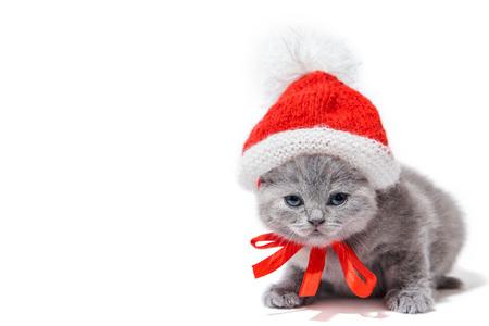 Little british kitten wearing Santas hat isolated on white background. Christmas concept Stock Photo