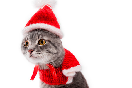 Grey tabby cat wears Santa's hat isolated on white background. Christmas and New year concept