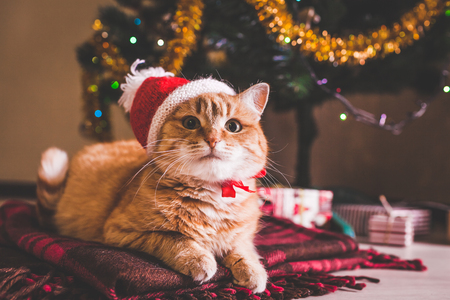 Red cat wears Santa's hat lying under Christmas tree. Christmas and New year concept