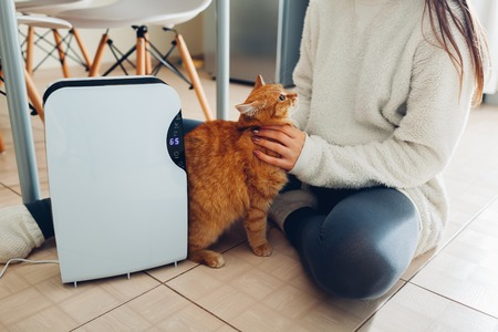 Dehumidifier with touch panel, humidity indicator, uv lamp, air ionizer, water container works at home while woman playing with cat. Air dryer Archivio Fotografico