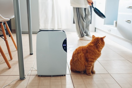 Dehumidifier with touch panel, humidity indicator, uv lamp, air ionizer, water container works at home while woman cooking with cat. Air dryer