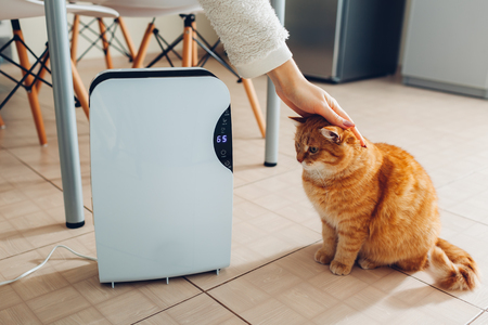 Dehumidifier with touch panel, humidity indicator, uv lamp, air ionizer, water container works at home while woman stroking her cat. Air dryer