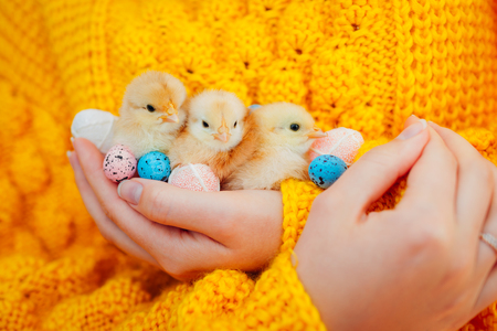 Easter chicken. Woman holding three orange chicks in hand surrounded with colorful Easter eggs. Standard-Bild - 120921867